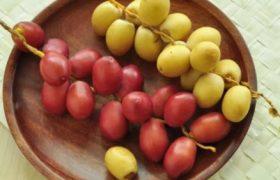 aneka-buah-kurma-muda-lezat